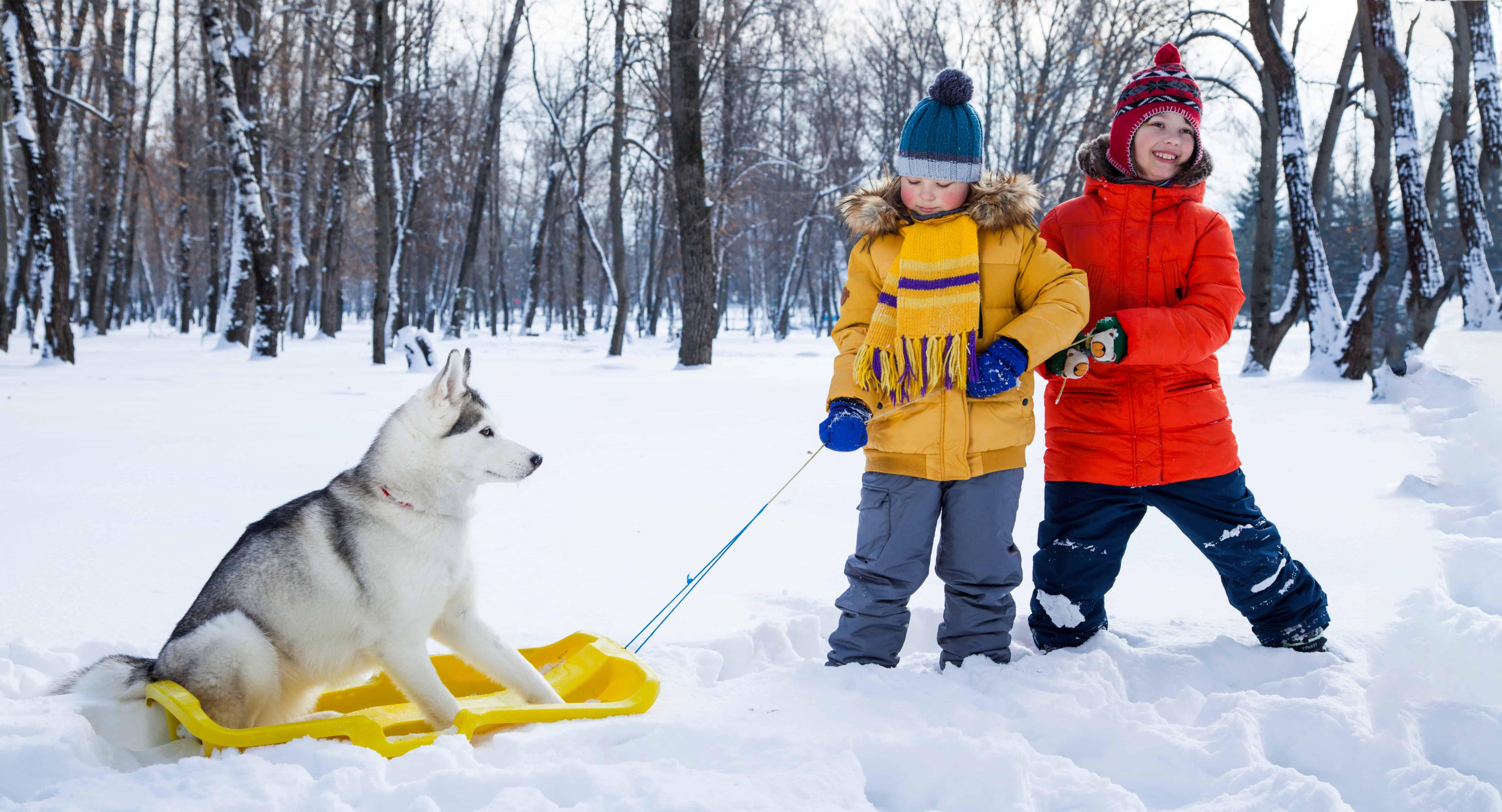 Na čo treba myslieť, ak máte (nového) psíka
