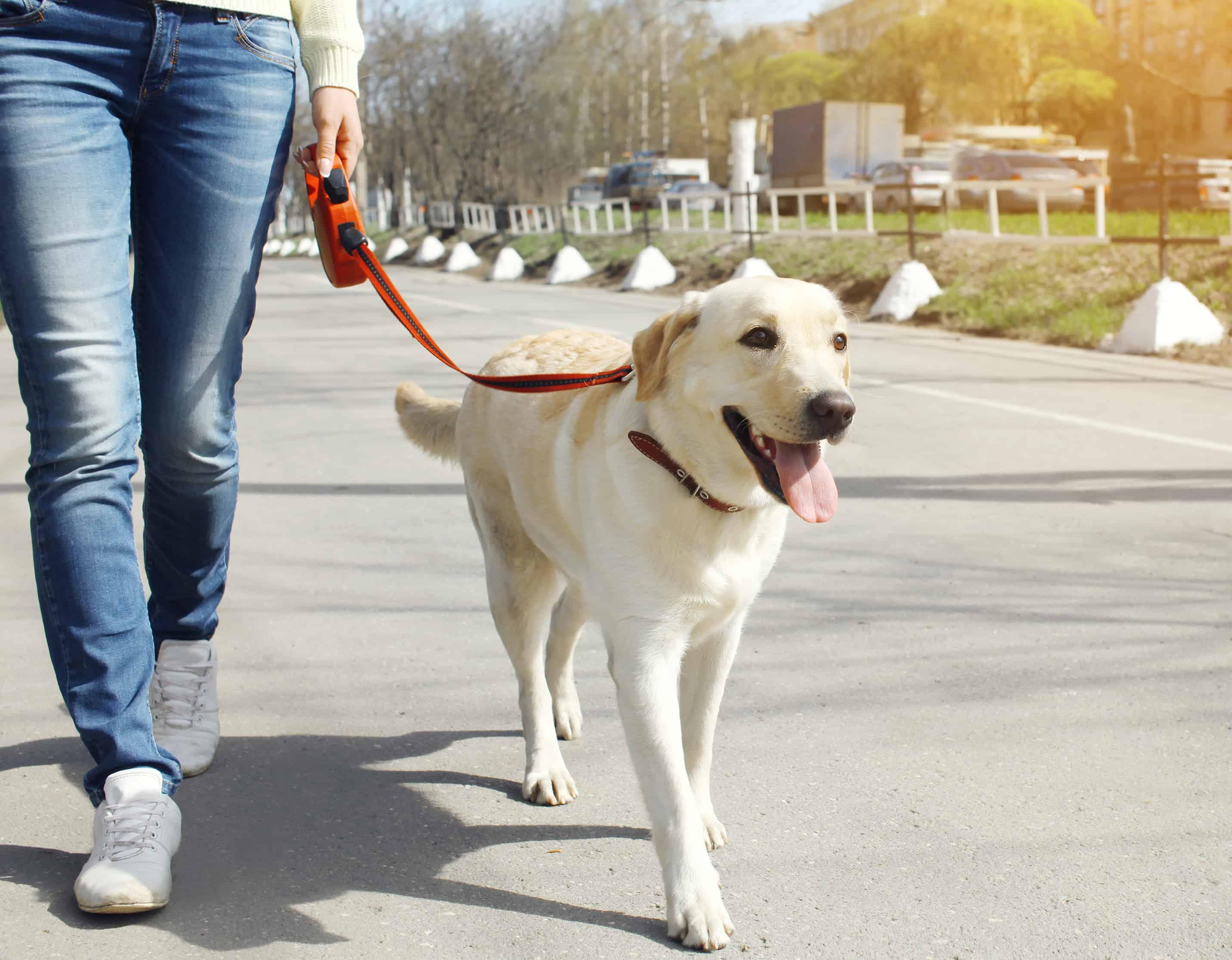 Prečo je kvalitný výcvik psa dôležitý
