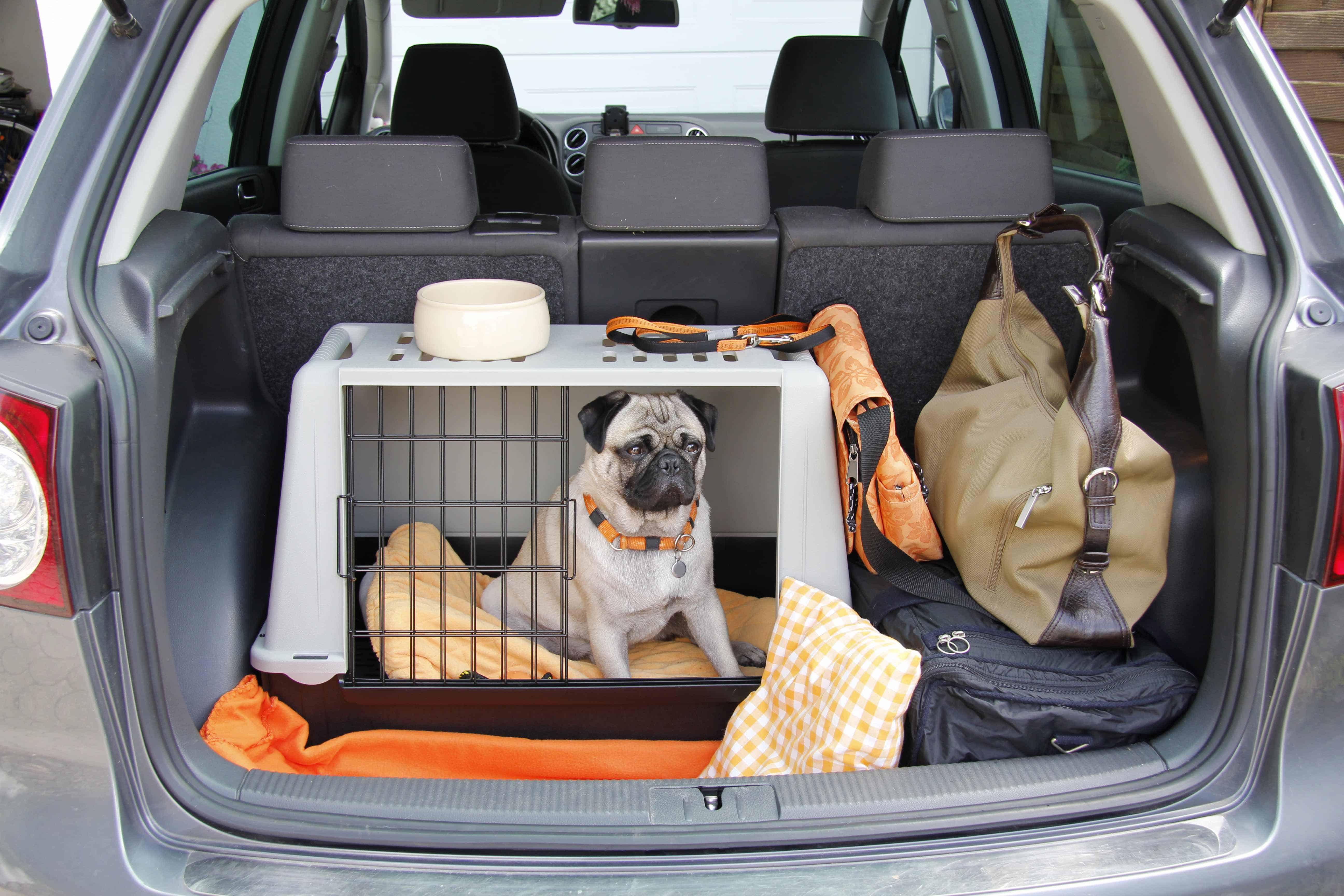 Na čo myslieť, keď cestujete so psíkom
