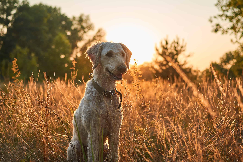 Ako sa správne starať o zdravie vášho psíka
