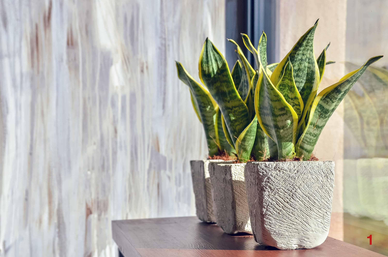 Tieto bežné izbové rastliny pohlcujú toxíny – testovala NASA